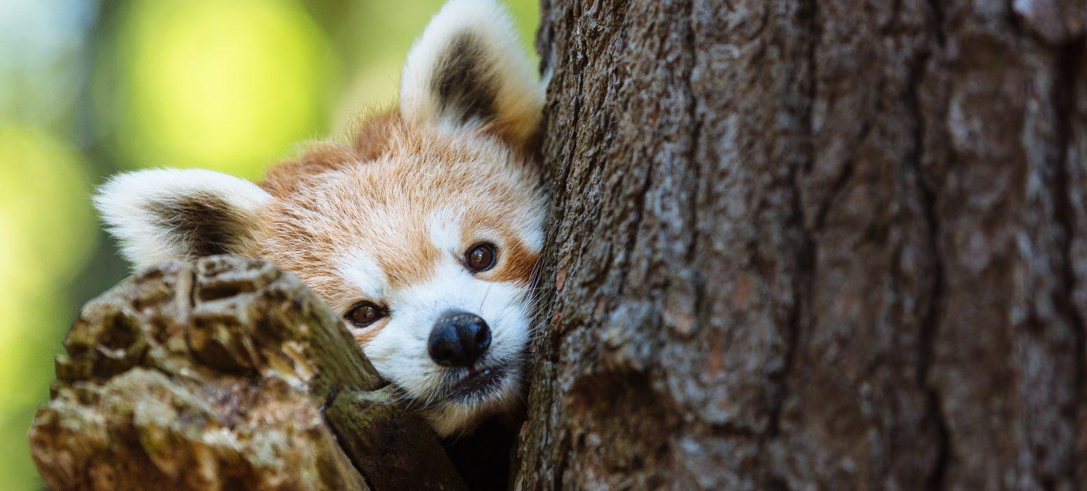 Good Zoo Membership header photo