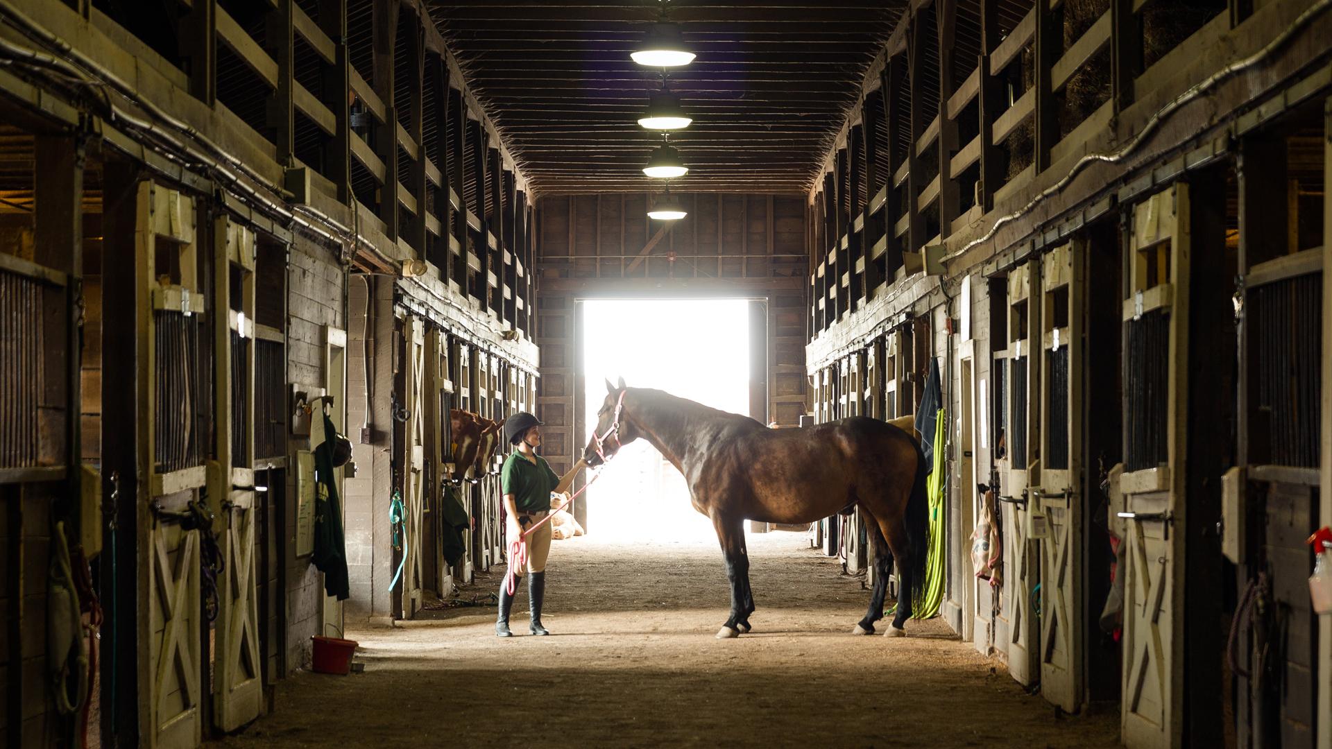 Horseback Riding photo