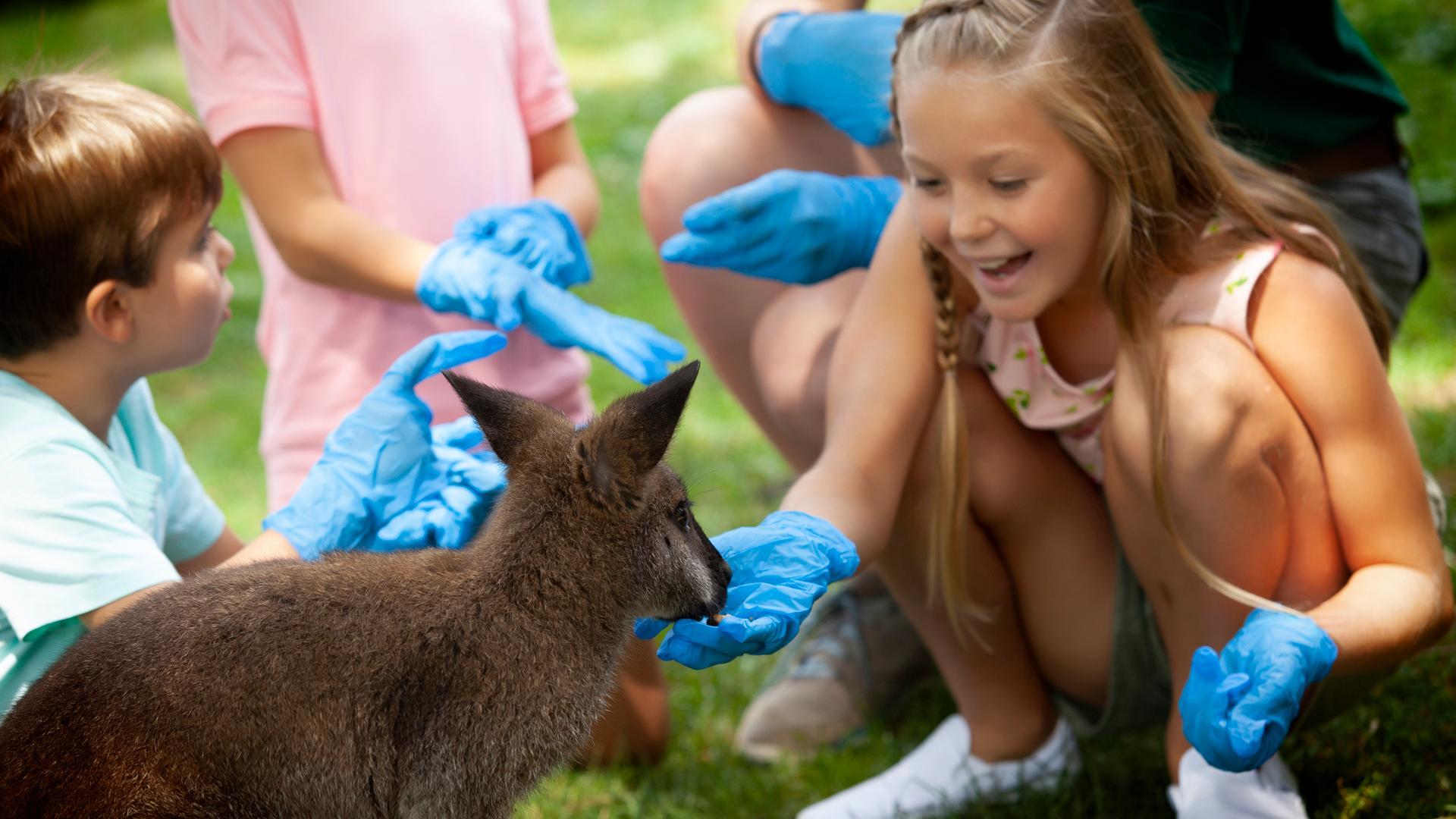 Animal Encounters photo