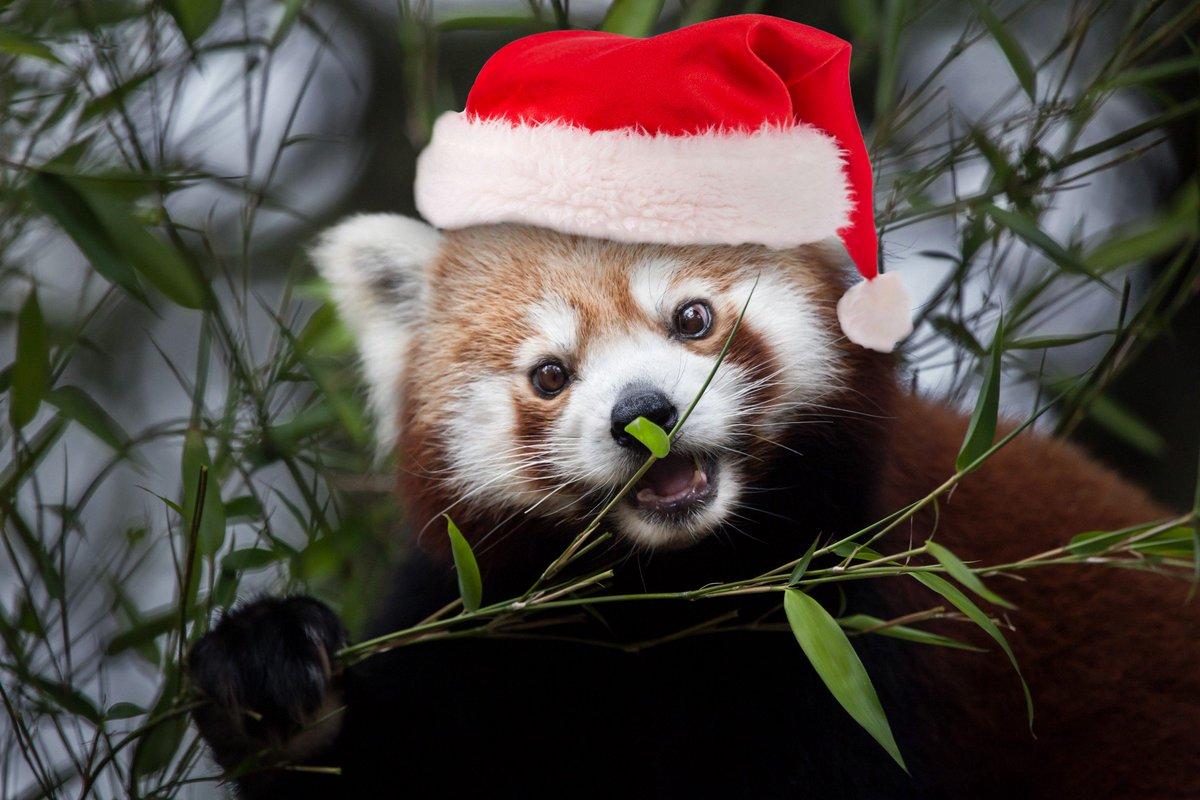 Christmas at Oglebay Good Zoo header photo